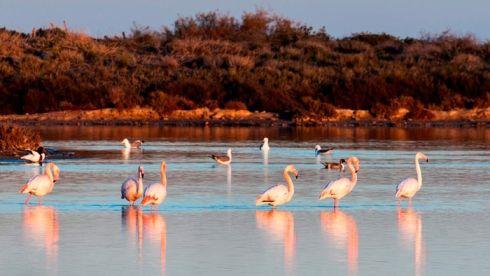 В Сан-Педро можно понаблюдать за красивейшими птицами фламинго!